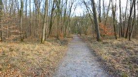 小径在一个森林里在春天 股票视频