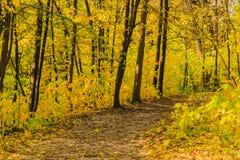 小径在一个美丽的秋天森林里 免版税图库摄影