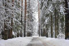 小径在冬天多雪的森林里 免版税库存照片