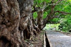 小径在庭院里, Si张海岛-泰国 库存照片
