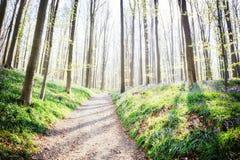 小径在春天森林自然背景中 库存图片