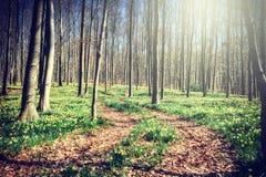 小径在春天森林里 免版税库存照片