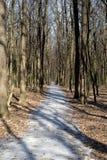 小径在春天森林 免版税库存图片