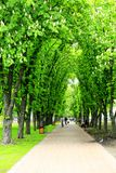 小径在有大树的公园 库存照片