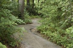 小径在森林里 免版税库存图片