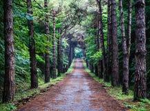 小径在森林里 库存图片