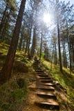 小径在森林- Sarganska Osmica (Shargan八)里-塞尔维亚 库存图片