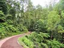 小径在热带森林里 免版税库存图片