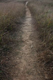 小径在草甸 免版税库存图片