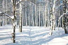 小径在晴朗的冬天森林里 图库摄影