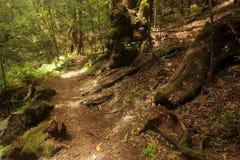 小径在Garajonay国家公园 免版税库存照片