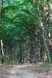 小径通过有山毛榉树框架的绿色森林  免版税库存图片