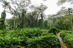 小径通过豪华的绿色热带植被 免版税库存照片