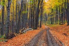 小径绕通过五颜六色的森林 库存照片