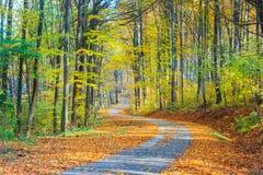 小径绕通过五颜六色的森林 图库摄影