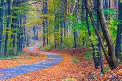 小径绕通过五颜六色的森林 库存图片