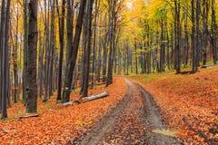 小径绕通过五颜六色的森林 免版税库存图片