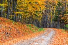 小径绕通过五颜六色的森林 免版税库存照片