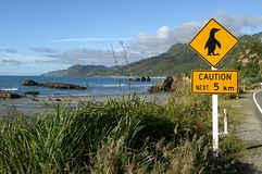 小心企鹅 库存图片