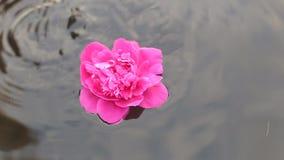 小心地举行美好的人的手开花漂浮在水池