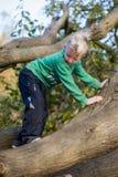 小心地爬树的男孩 库存照片