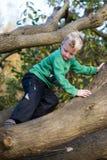 小心地爬树的男孩 免版税库存照片