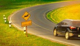 小心地驾驶在旅行期间的游人的黑SUV汽车在曲线柏油路在与鹿跳跃的黄色交通标志附近 库存图片