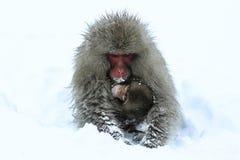 小心猴子 免版税图库摄影