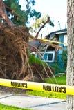 小心磁带保护免受树 免版税库存图片