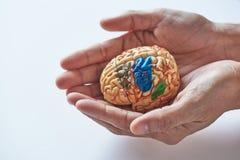 小心脑子的概念 库存图片