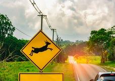小心!野生生物在柏油路旁边的横穿标志在小小山附近和绿草调遣 免版税库存图片