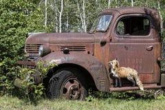 小您能驾驶我的汽车 库存照片