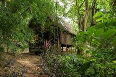 小房子的密林 免版税图库摄影
