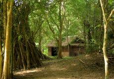 小房子的密林 库存图片