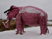 小指近视的大象 库存照片