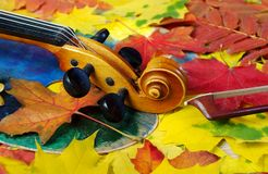小提琴和秋叶 库存图片