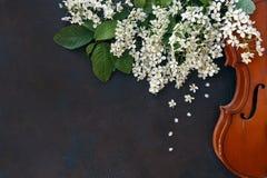 小提琴特写镜头有美丽的开花的树的在黑背景分支 库存照片