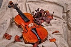 小提琴和在棕色背景的秋叶 库存图片