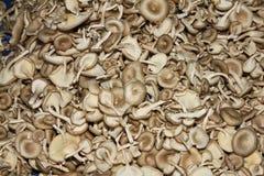 小新鲜的蘑菇 免版税库存图片