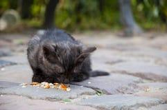 小无家可归猫吃 库存图片