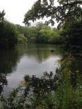 小暗藏的池塘 库存图片