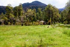 小木瑞士山中的牧人小屋和一条长凳在绿色牧场地和围拢由树 免版税库存照片