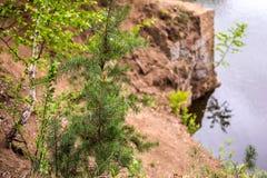 小杉木和桦树在岸与一件石猎物在公园 免版税库存图片