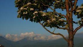 小树和山 免版税库存照片