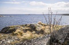 小树和草在湖的岩石岸backg的 库存图片