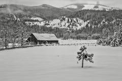 小树在多雪的牧场地 库存照片