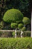小树在庭院里 库存照片