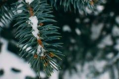 小树枝与小DOF的被吃的寒冷与杉木锥体 图库摄影