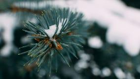 小树枝与小DOF的被吃的寒冷与杉木锥体 库存图片
