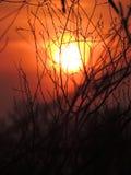 小树枝在晚上阳光下 库存照片